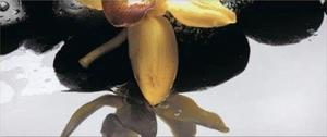 Orchid Yellow декор 2- 2 части