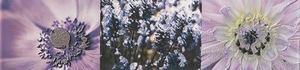 Maxima Violet 2 фриз