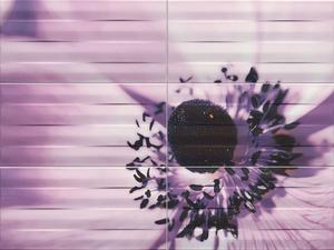 Maxima Violet 2 декор