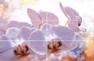 Виола  декор  Орхидея 2493